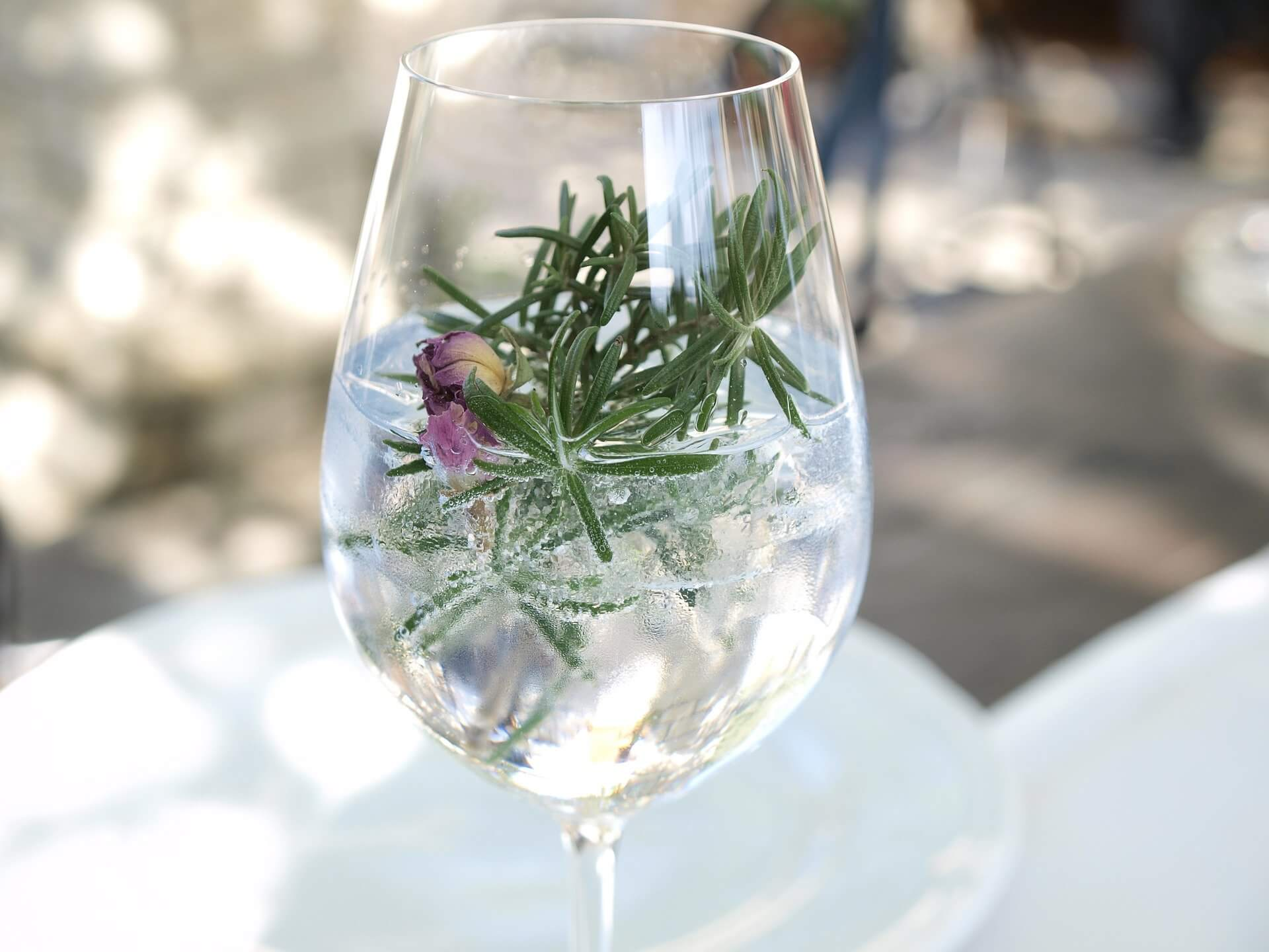 fun facts about gin